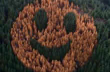 Где находится созданный из деревьев гигантский смайлик