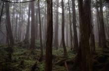 Аокигахара — пугающий лес самоубийц в Японии