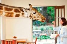 Завтрак вместе с жирафом. Необычный отель в Африке, который подарит бурю эмоций