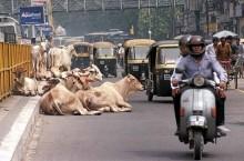 Что нельзя делать в Индии туристам и местным жителям