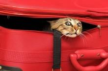 Без кота и поездка не та
