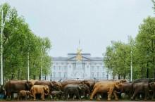 Слоны под окнами Букингемского дворца: откуда они там появились