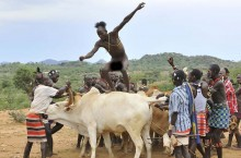 Бег по спине быка ради невесты. Традиции народа Хамар
