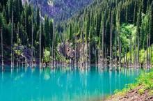 Загадочное озеро Каинды – лес в Казахстане, который утонул