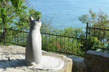 Город в Крыму, в котором поклоняются котам. Гурзуфские коты