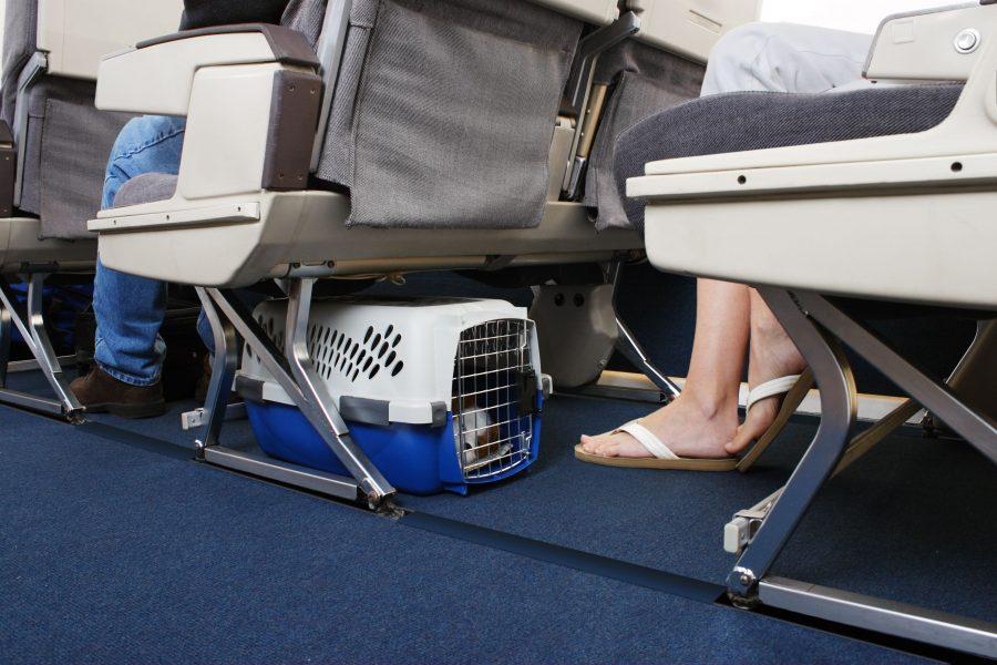 Провоз животного на борту самолета