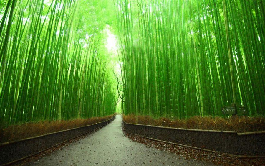 Бамбуковый лес Сагано Япония