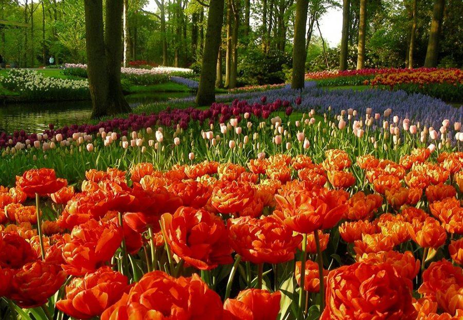 Сады Кёкенхоф, Нидерланды
