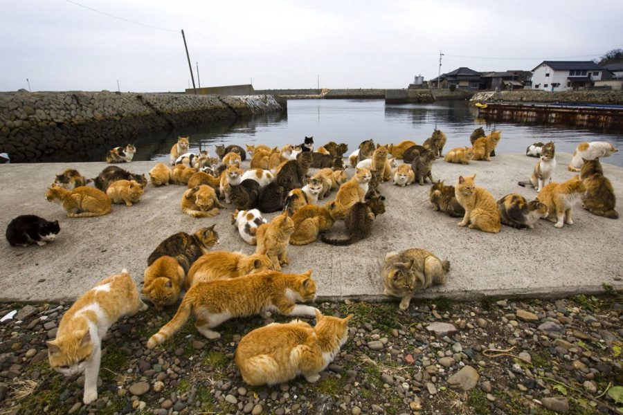 Японский остров с кошками