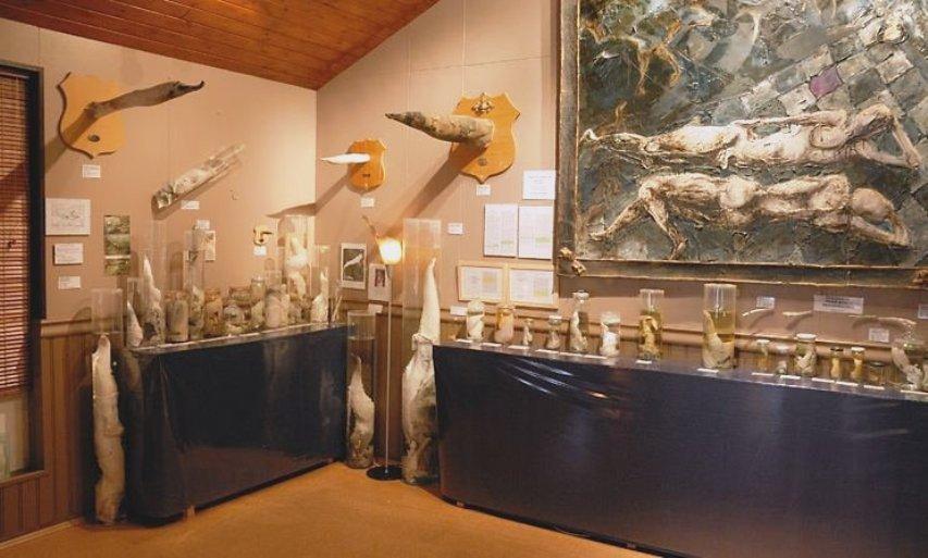 Хусавикский музей фаллосов в Исландии
