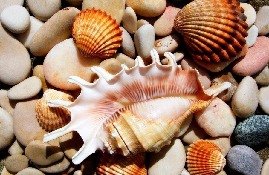 Кораллы и раковины вывозить нельзя