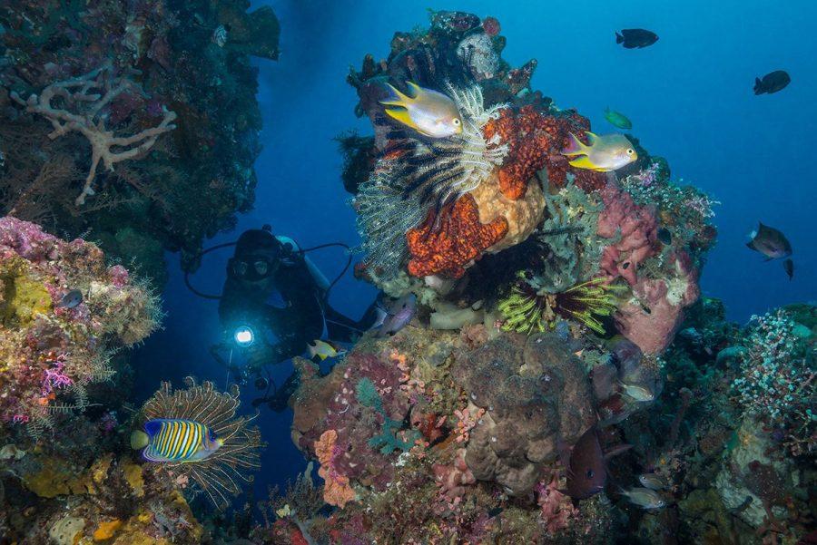 Бали, Индонезия для дайвинга
