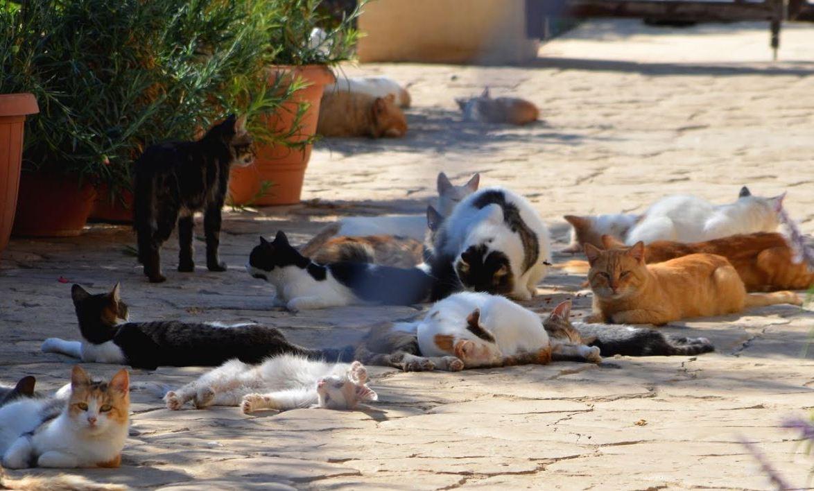 Кошачий парк на Кипре для любителей кошек