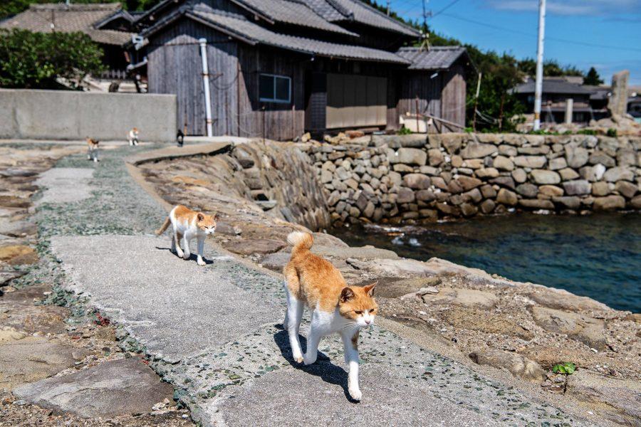 Острова Тасиро и Аксиома в Японии