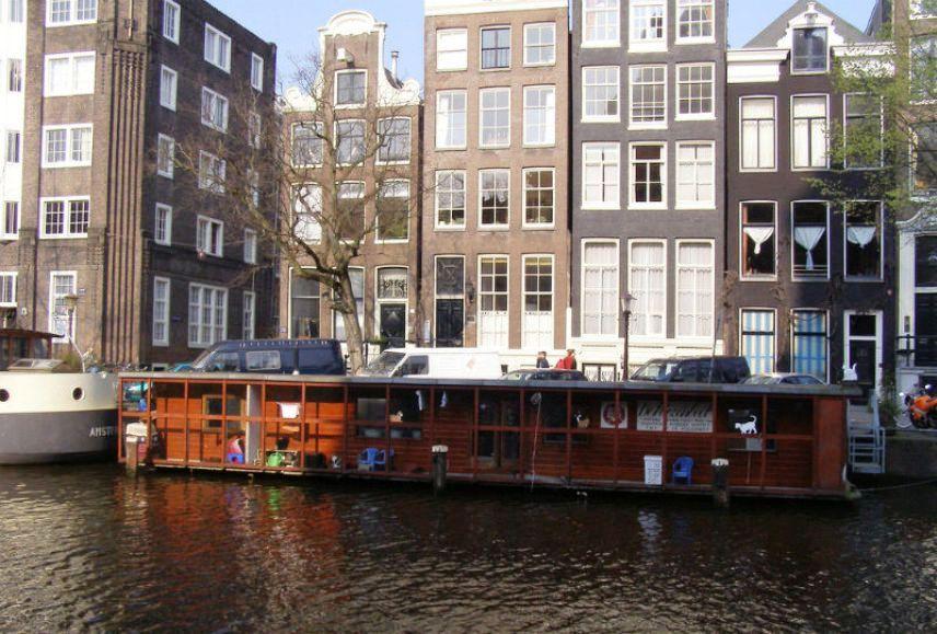 Плавучий дом для кошек в Нидерландах