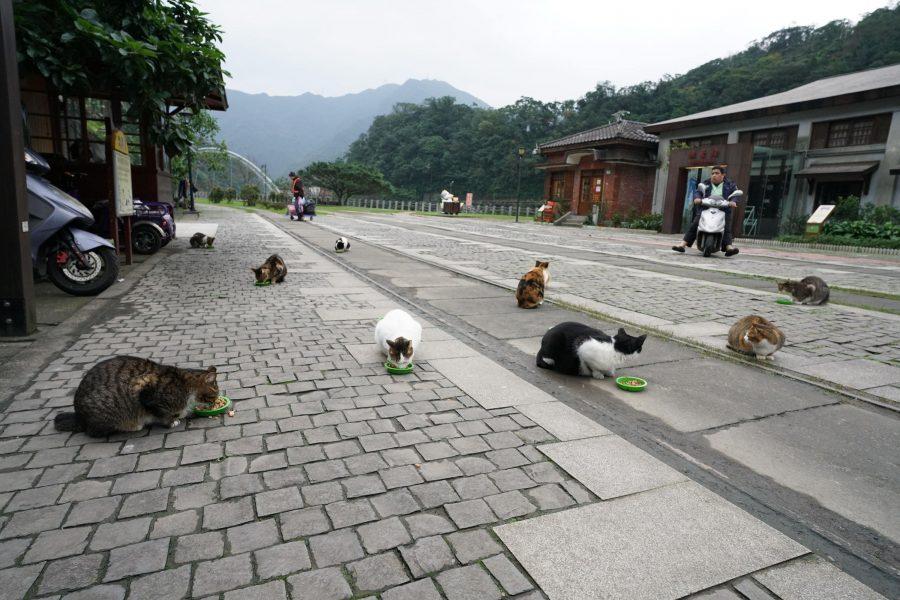 Деревня кошек Хутонг, Тайвань