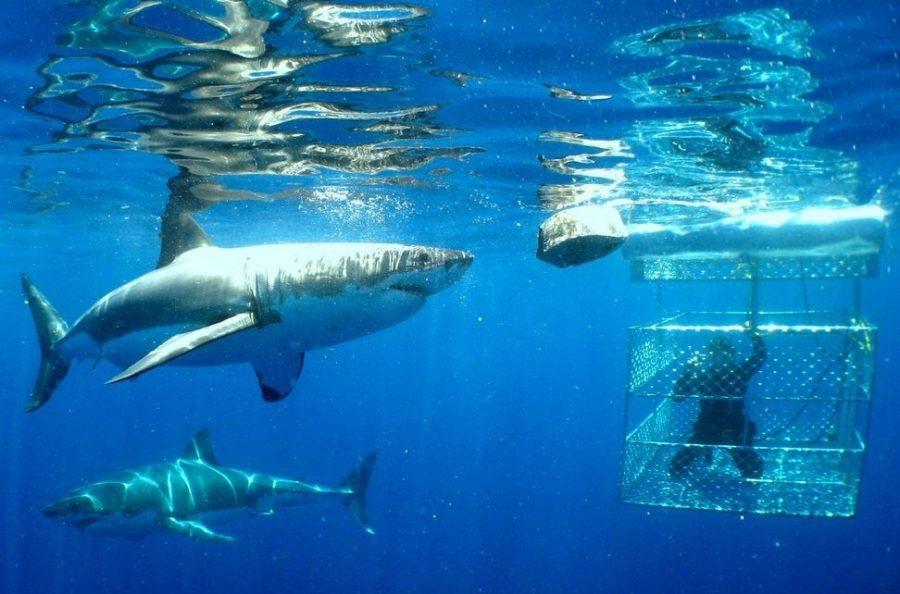 Кишащее акулами море Гансбай в Южной Африке
