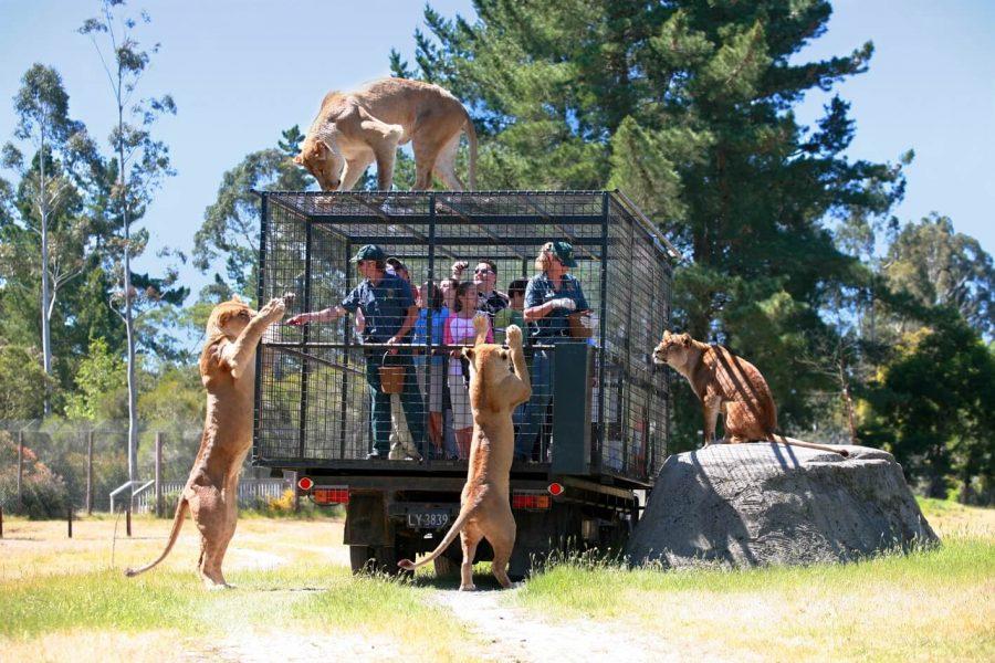 В новозеландском зоопарке Орана