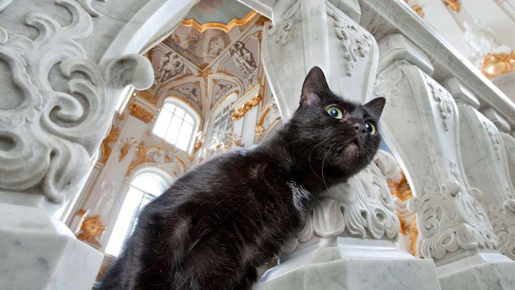 Кошки в Эрмитаже охраняют ценности