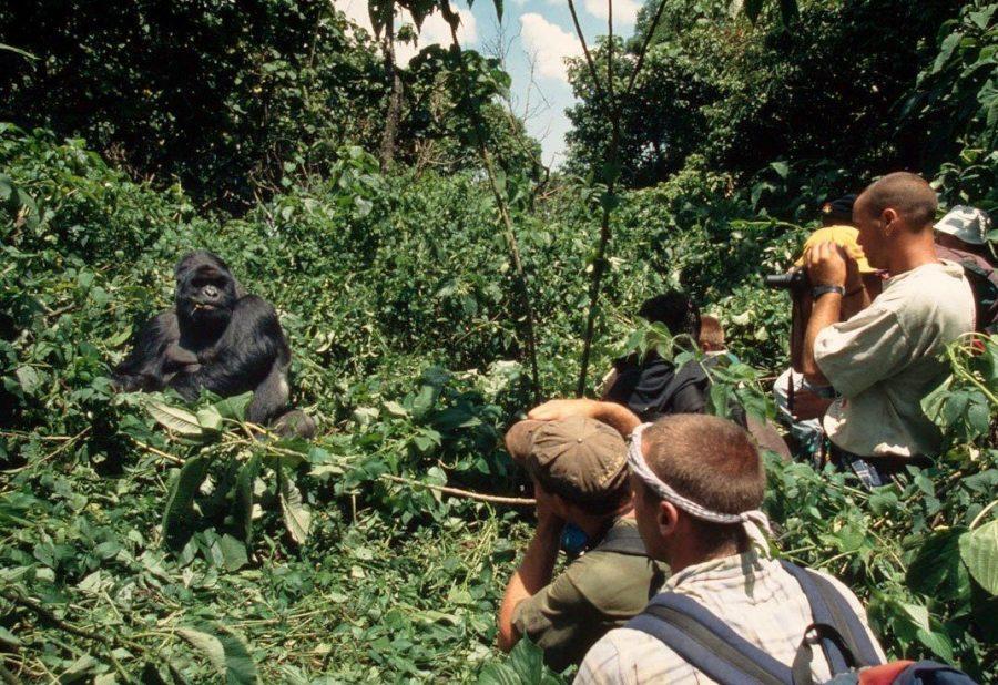 Поездка к гориллам Конго