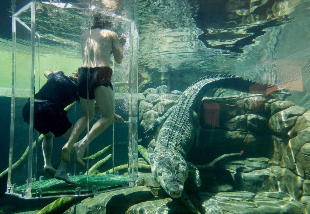 Погружение в воду с крокодилами