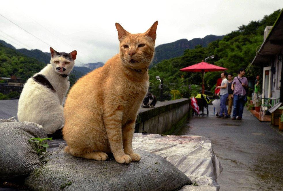 Кошачий городок в Тайвани