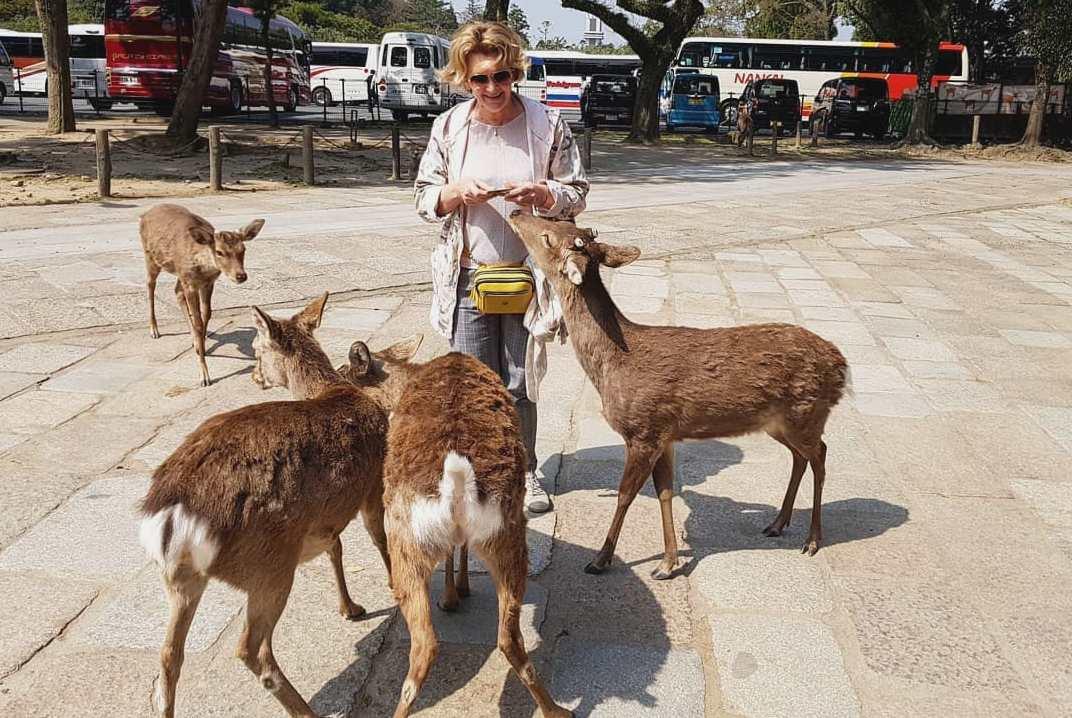 «Страна Оленья» в Нара, в Японии