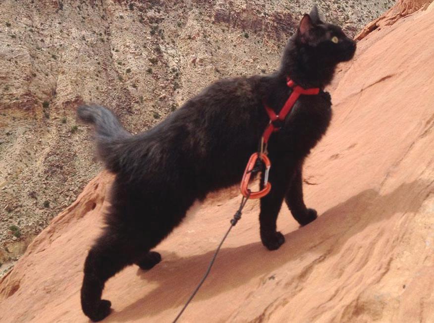 Кошка Милли путешественница