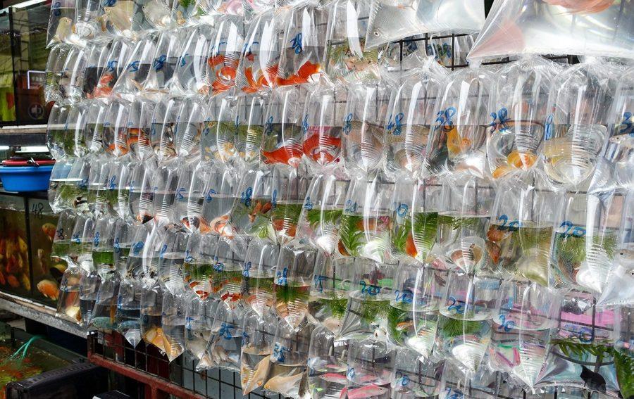 Рынок золотых рыбок в Гонконге