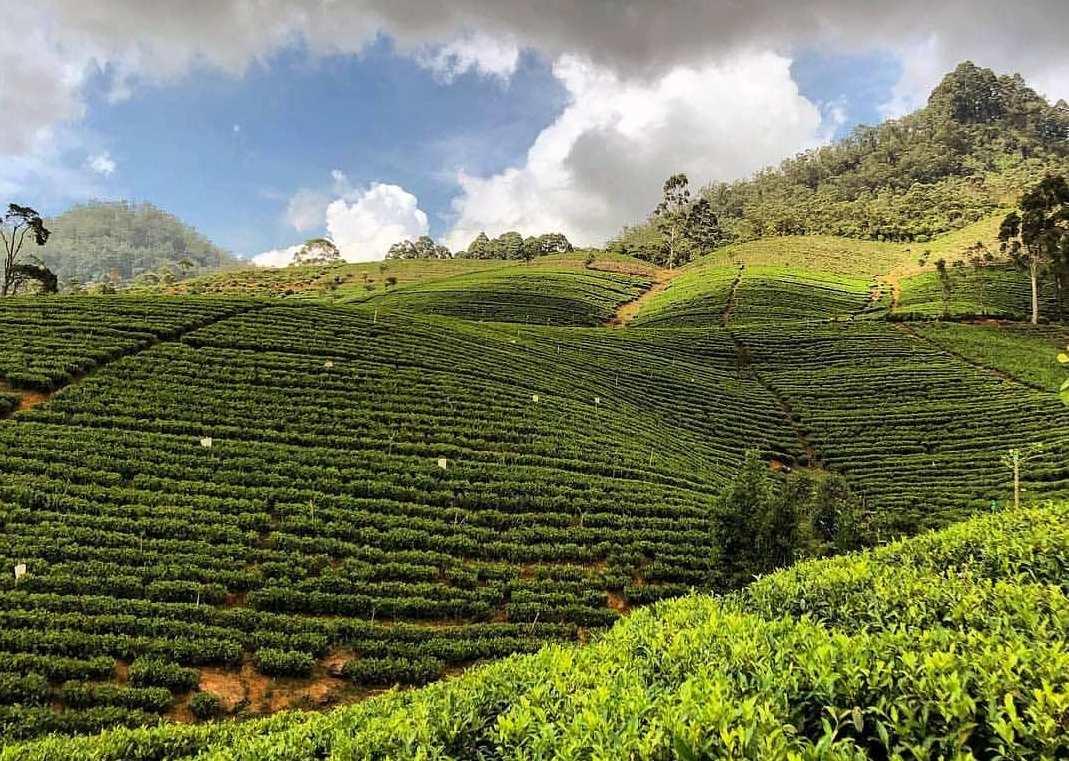 Исчезнувшее государство Цейлон