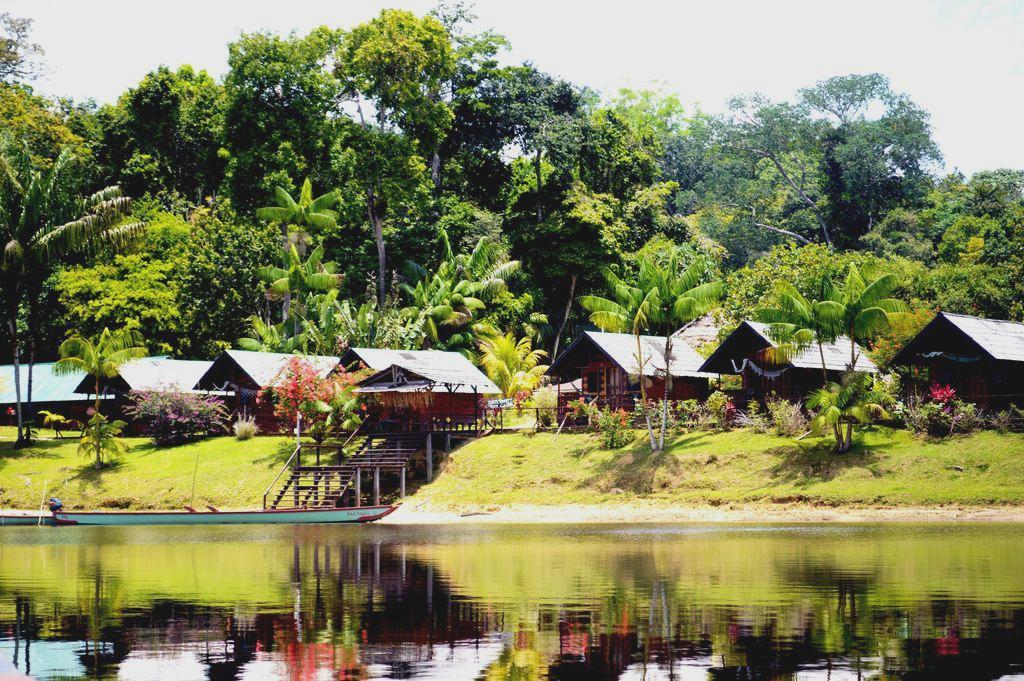 Государство Суринам лесная страна