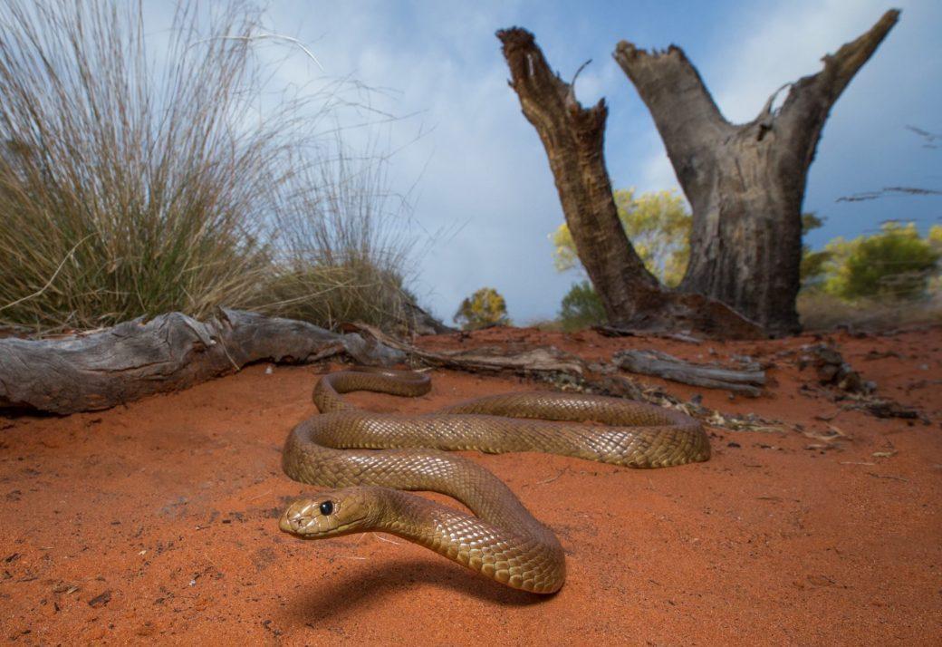 Австралийский парк со змеями