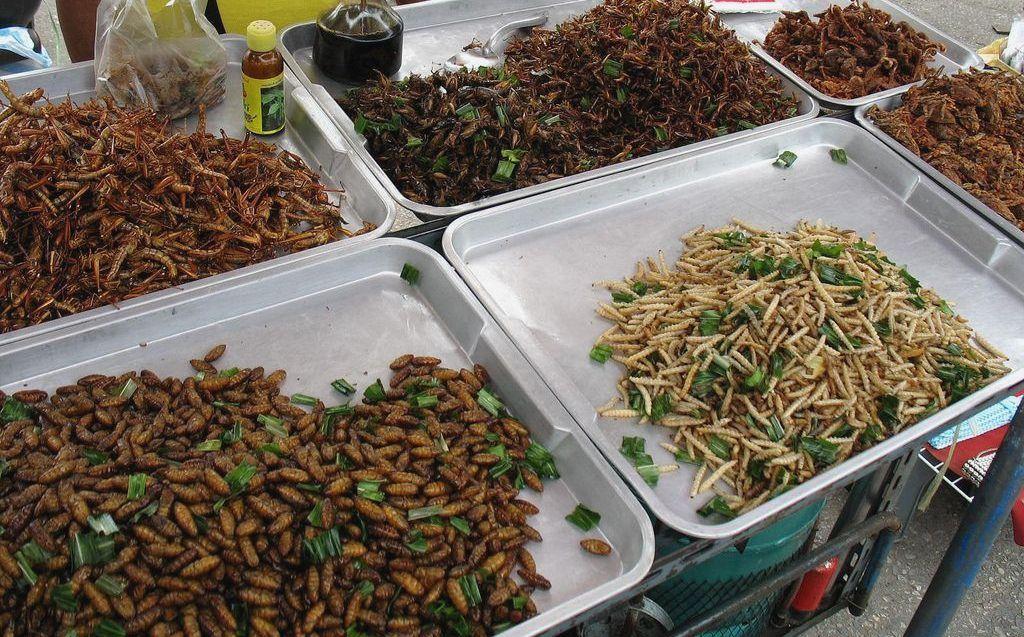 Жаренные насекомые на продажу