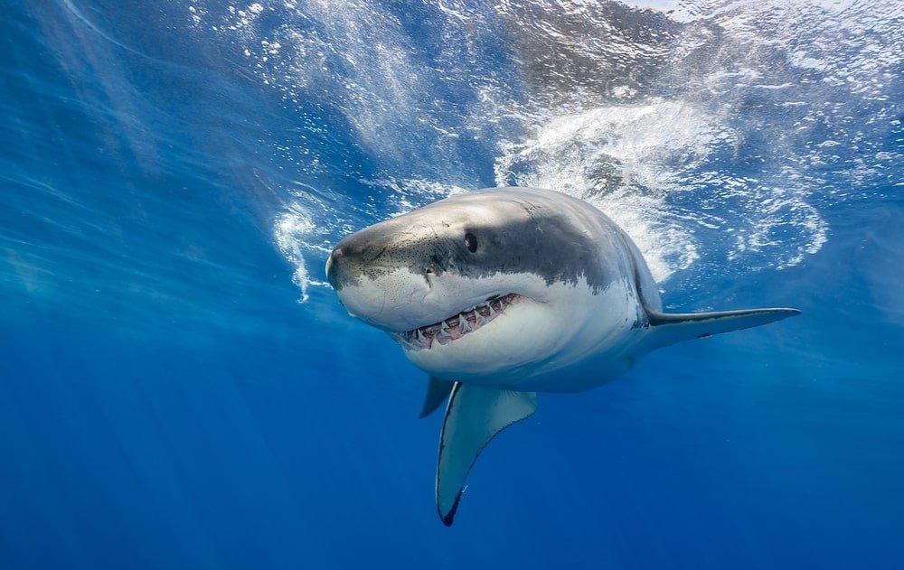 Что делать если напала акула