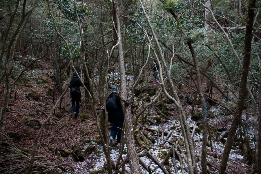 Туристы в лесу Аокигахара