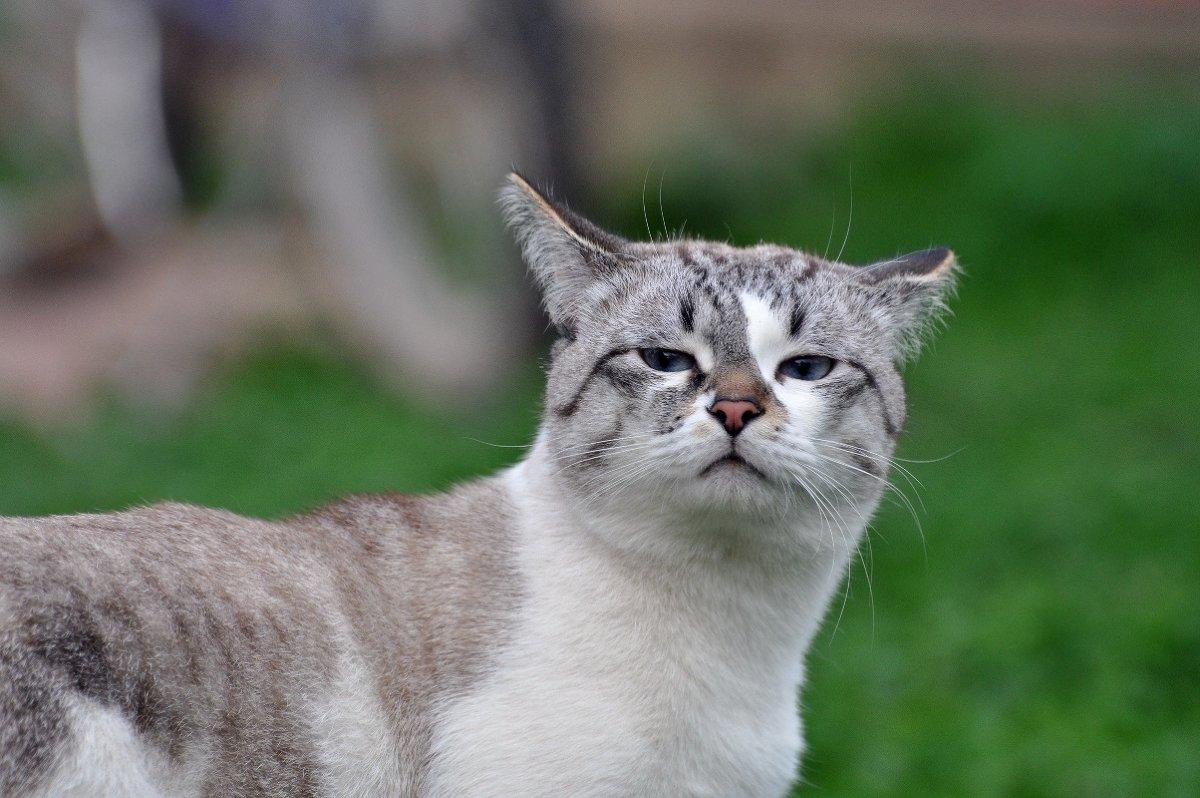 Подзывать кошку на улице
