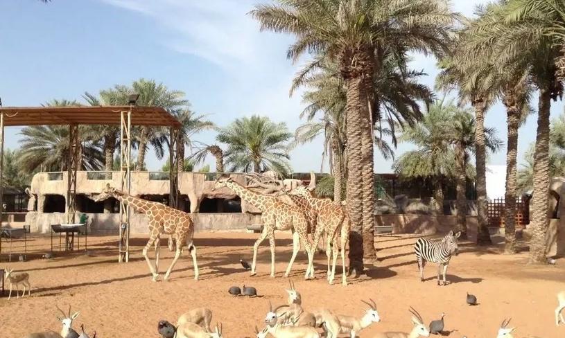 Большой Дубайский зоопарк