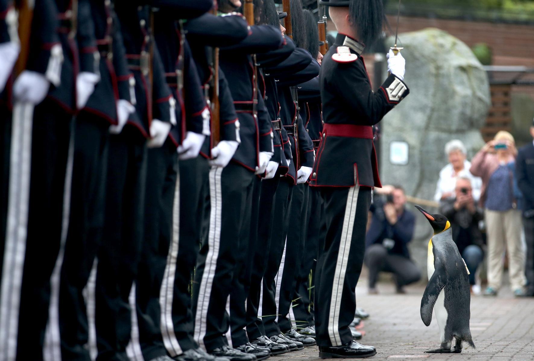 Полковник-пингвин на Эдинбургском параде