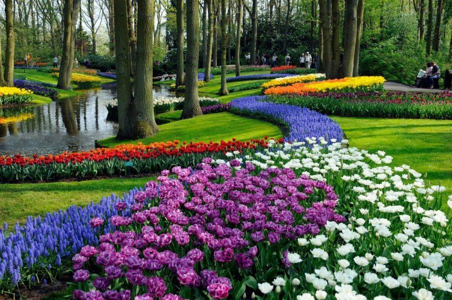 Королевский парк цветов в Нидерландах