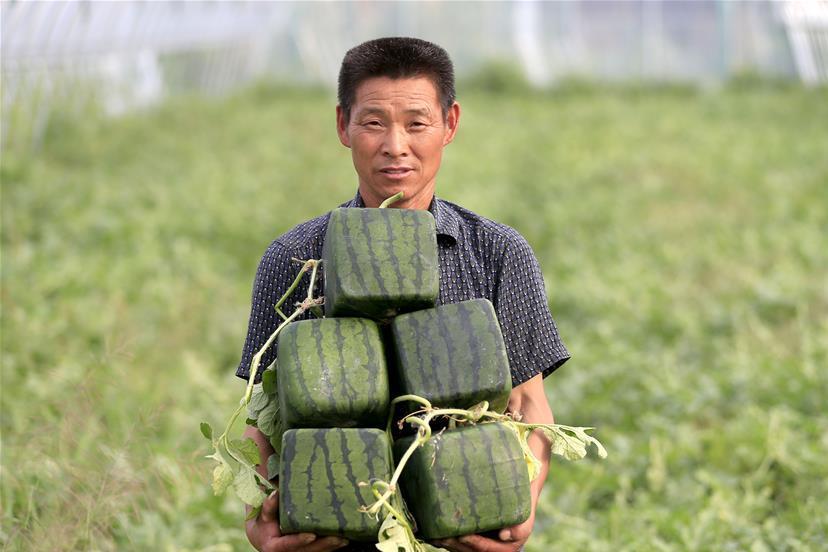 Квадратные арбузы в Японии
