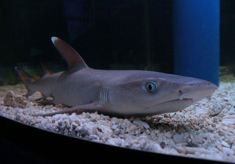 Аквариум для ручной акулы