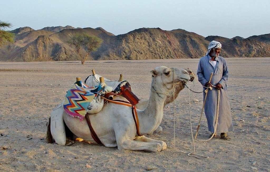 Бедуины - пустынные кочевники