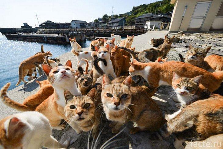 много котиков