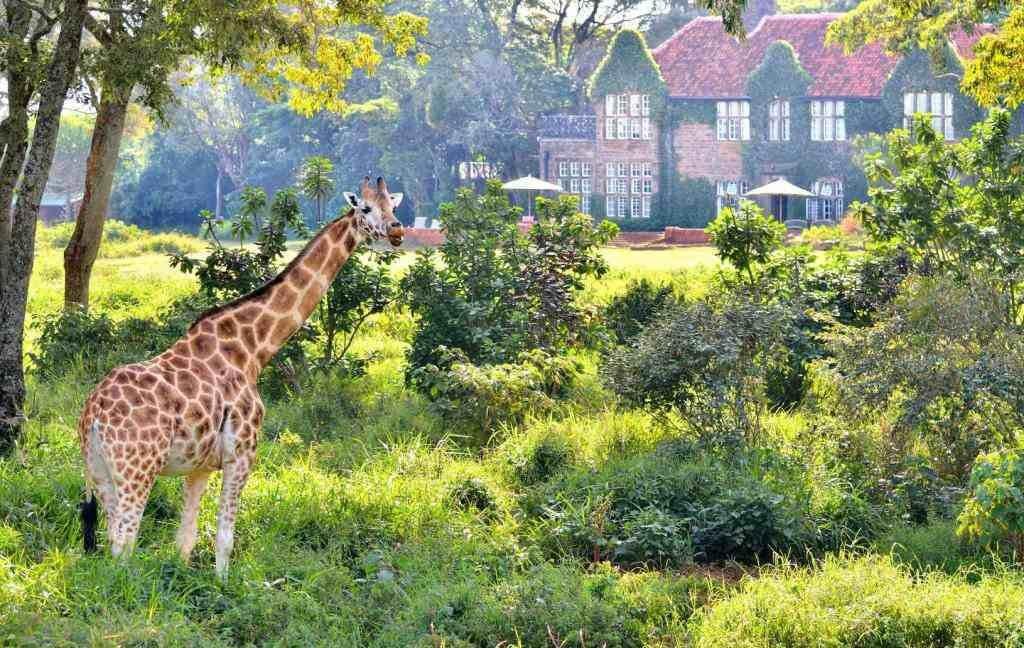 Уникальная природа Кении