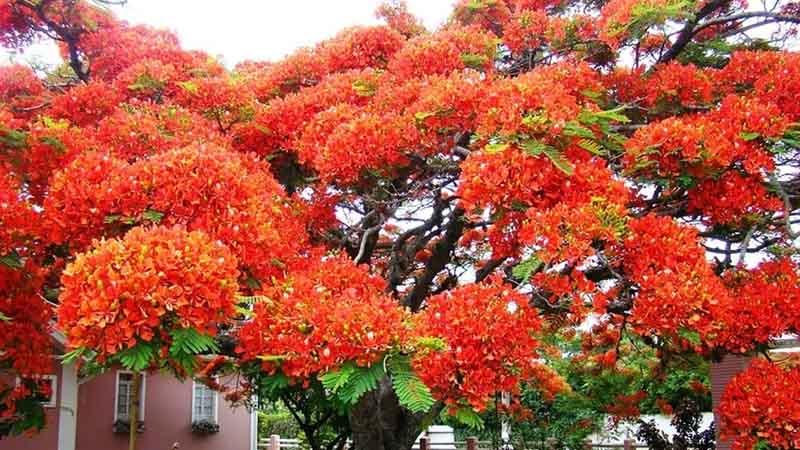 Какие деревья считают самыми красивыми в мире