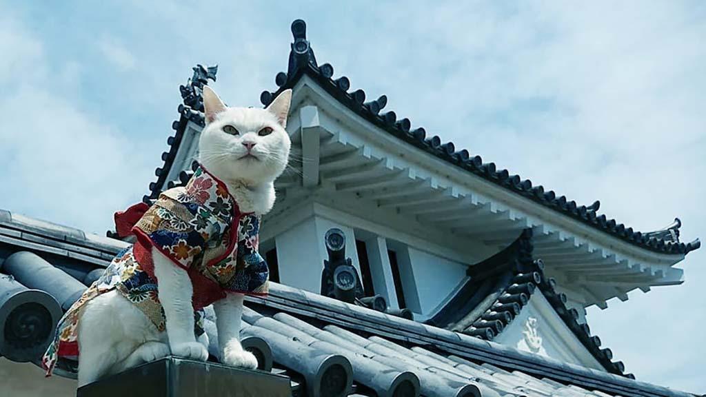 кошачий храм Японии