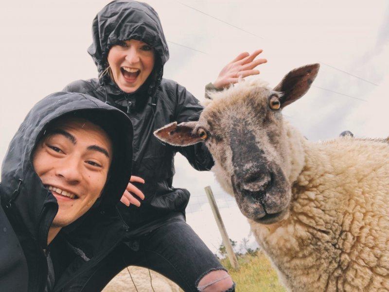 В какой стране насчитывается больше овец, чем людей
