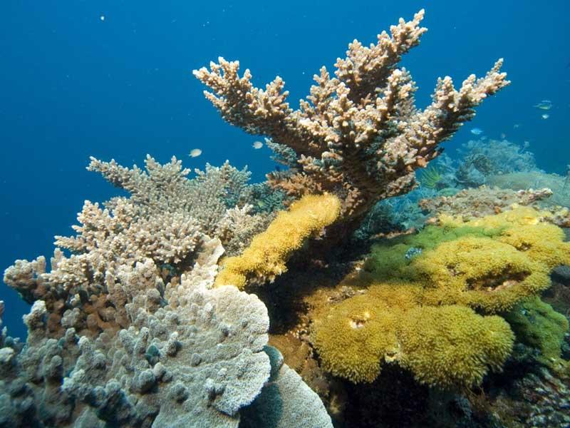 гуам Кораллы