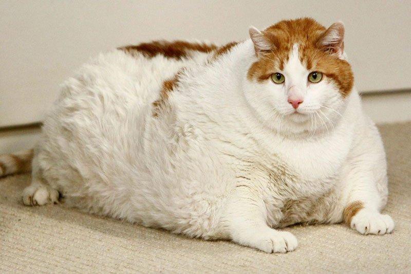Авиабилеты для толстых котов подорожают