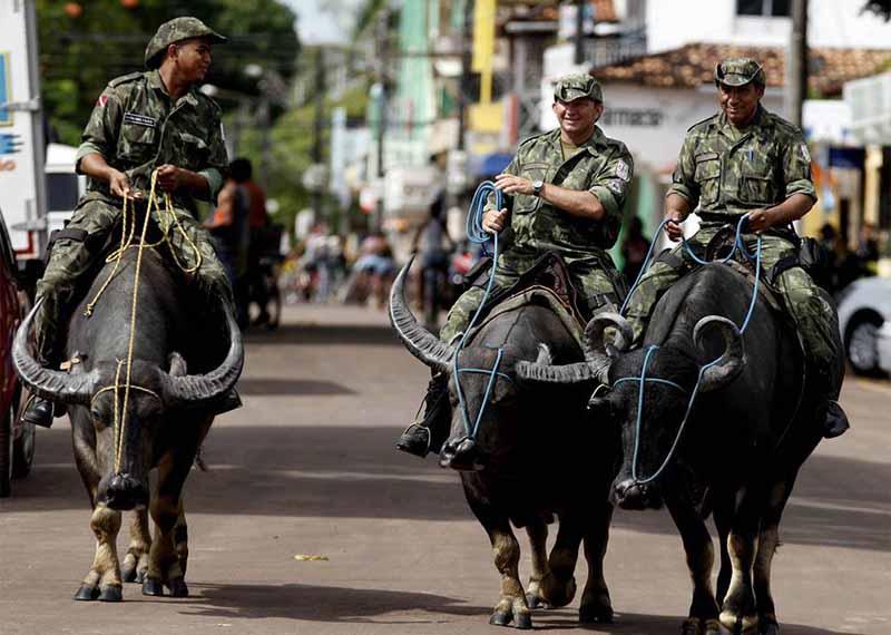 Полицейские острова Маражо отправляются в патрулирование на буйволах